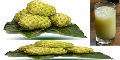 Buah Mengkudu Obat Kanker Payudara Herbal Alami